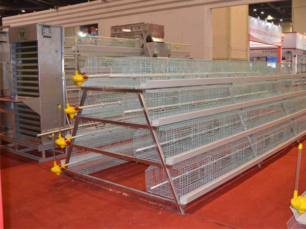 A type Cage for pullet chickens