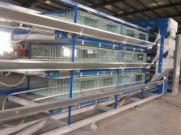 H type Cage for pullet laying chickens