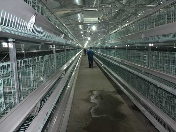 H type chiken layer cages