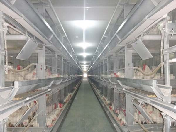 broiler breeding houses