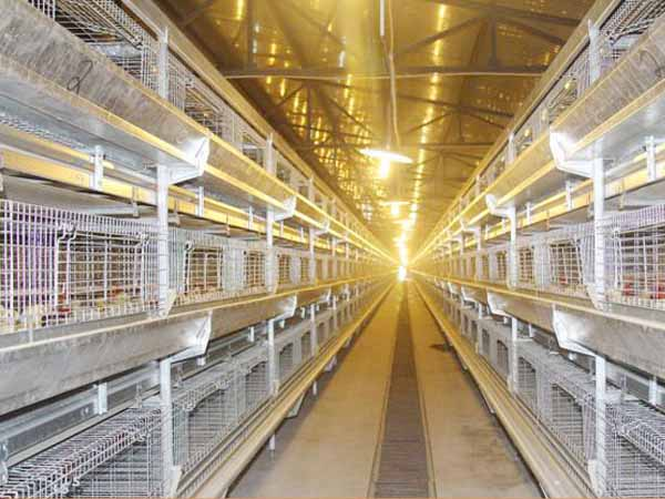 broiler chicken cages for sale