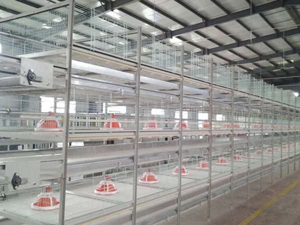 broiler chicken cages