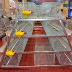 Broiler Baby Chick Cages