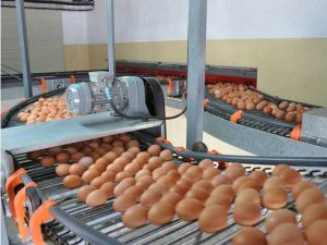egg collecting machine
