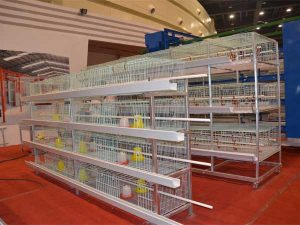 layer pullet cages