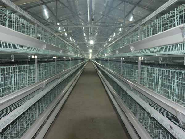 poultry farming chicken cage in our industry is very automated.