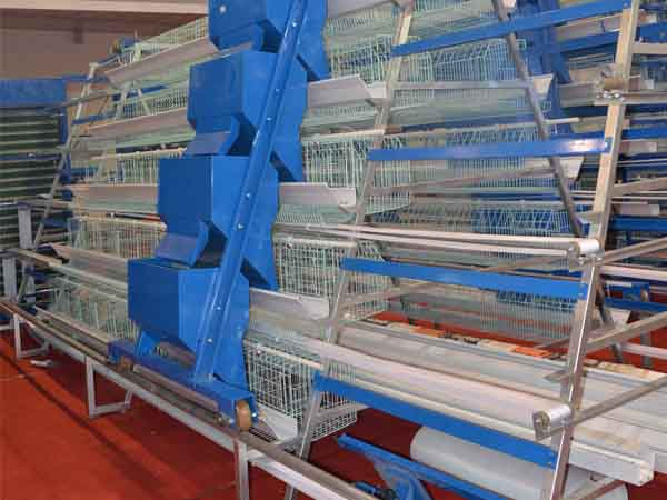 poultry feeding system
