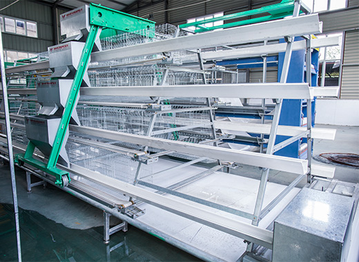Chicken farming equipment of Atype chicken cages can give you best chicken farm for your flocks.