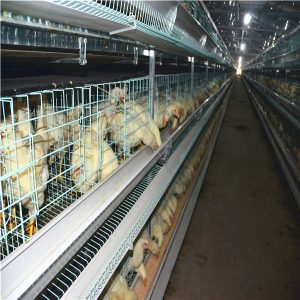 chicken breeding cages in poultry farming equipment manufacturers