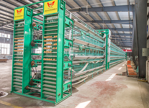 Our Htype chicken cages would be the best auto poultry farming equipment for egg laying hens.