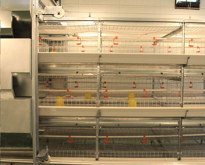 battery layer baby chick cage