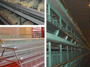 commercial poultry battery cage system for sale