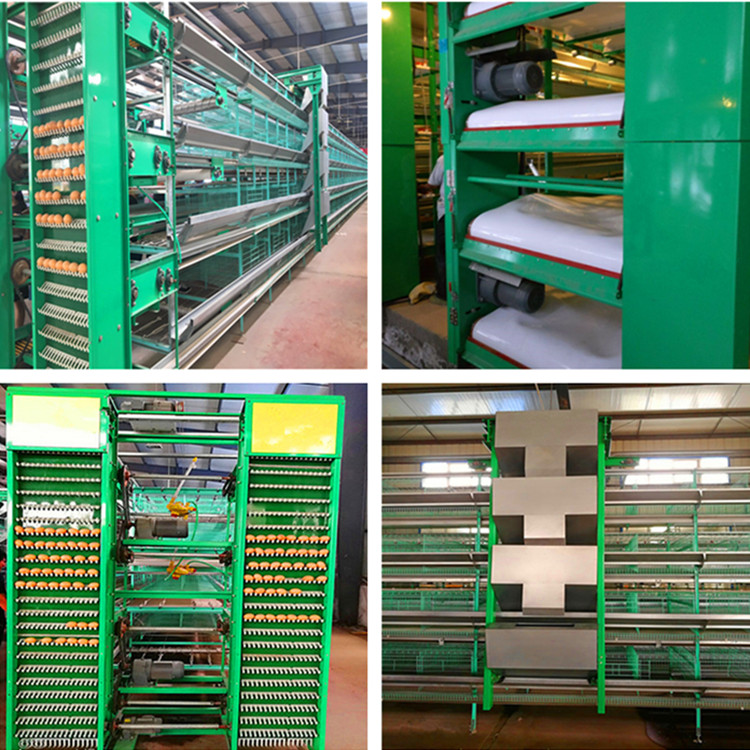laying hens cages in poultry farming  equipment industry