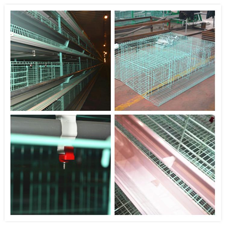 poultry farming equipment