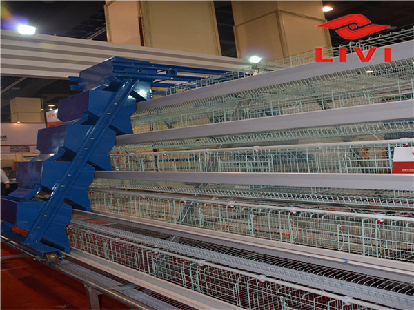 Atype battery cage equipment are most sold for our customers.