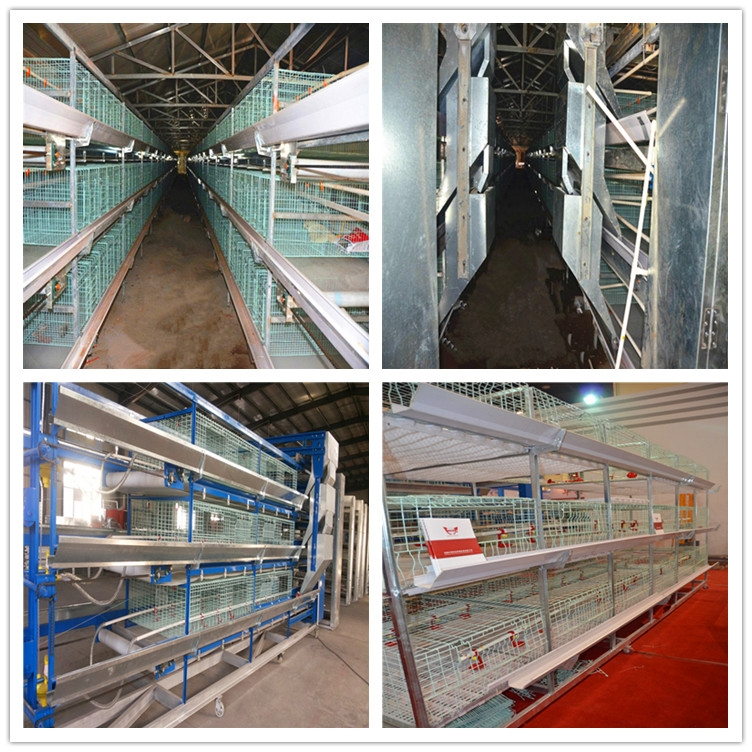 broiler cages for poultry farming are advanced equipment in Livi Machinery.
