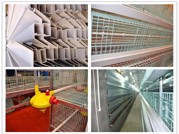 chicken farm supplies play an vital part in poultry farming industry.