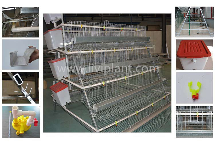 chicken equipment and supplies