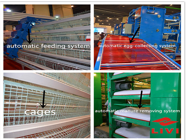 We have a fuul set of chicken cage equipment for poultry farmers.