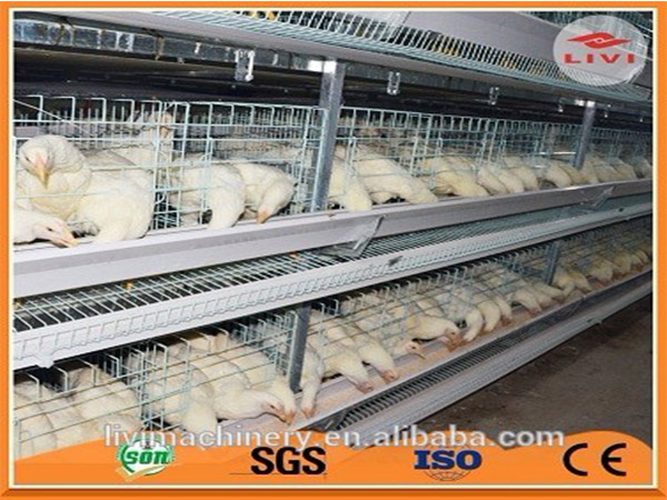 Poultry farming cages for battey hens are the feature equipment for modern poultry farm.