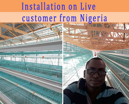 Chicken farming equipment are installed successfully in our Nigerian customers.
