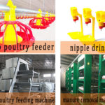 Equipment for Rearing Chicken | Layer Cage System in Pakistan