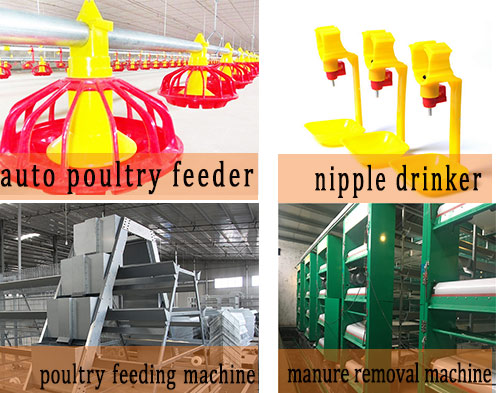 Livi can supply poultry farming equipment with automatic chicken supplies.