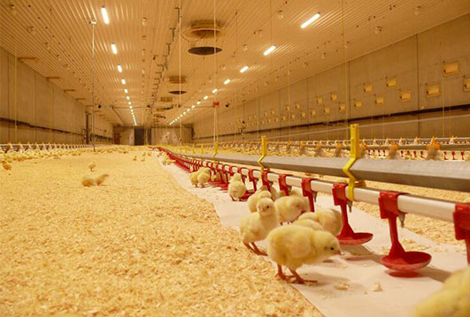 When your baby birds are not enough to live in baby cages, we can provide you best baby chickens farming supplies.