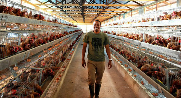 Poultry farm business in Kenya.