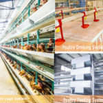 Zimbabwean Suppliers – Chicken Layer Battery Cages Equipment for Sale