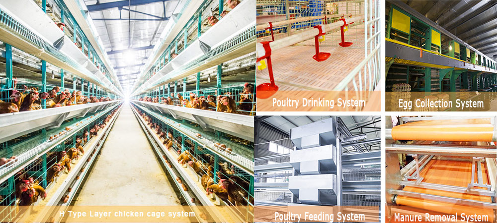 There are the complete chicken layer cages system in Livi Machinery.