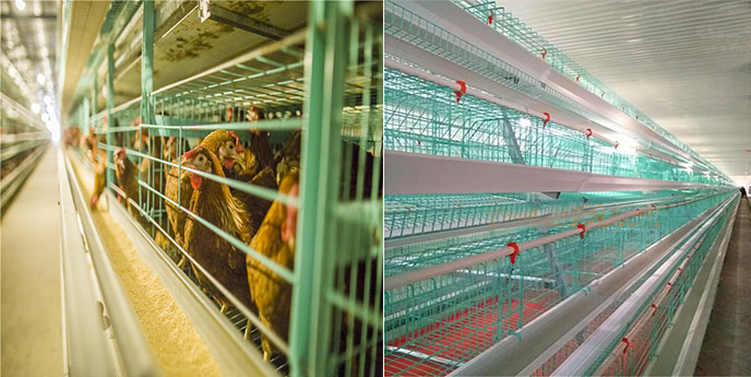 Poultry farming equipment for sale in Pakistan would be more and more popular for its low cost and on-live installation features.