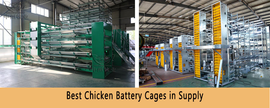 Chicken battery cages for sale in Zambia with feeding system and egg collection system.