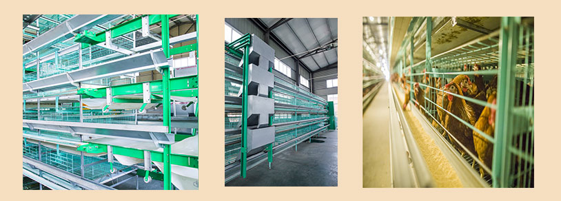 The battery cage wire equipment for sale in Ghana poultry farming industry.