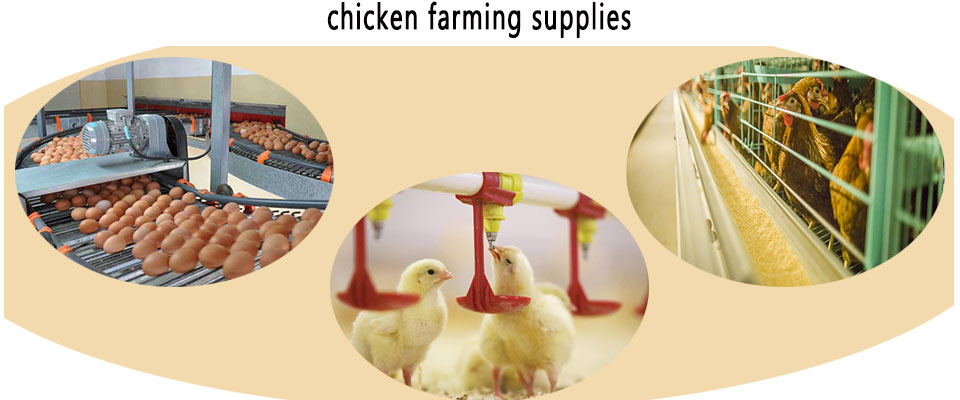 Best chicken farming supplies are suitable for your poultry farming industry.