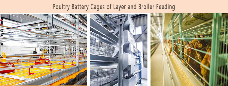 Poultry farming equipment for broiler and layer can satisfy your poultry farms needs.