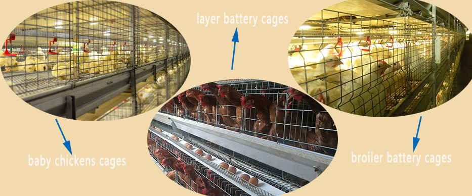 Exquisite battery cages equipment are in available in reliable poultry farming manufacturer.