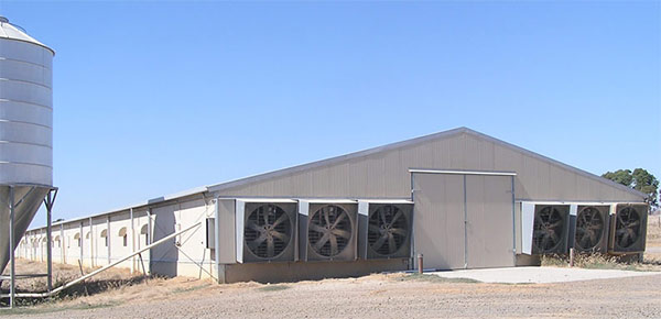 the outside of large scale chicken house farming.