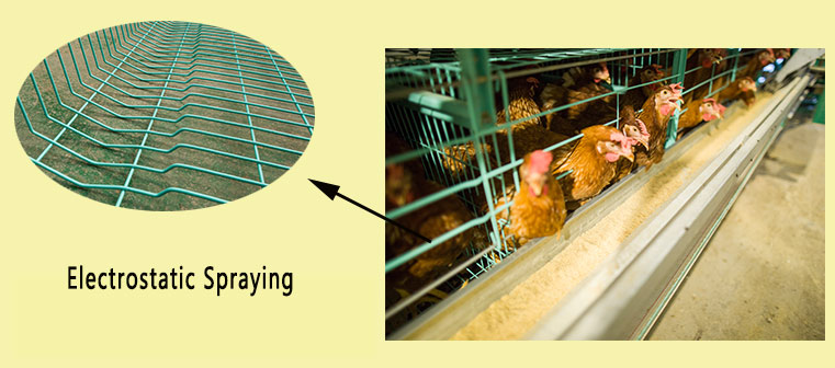 The chicken cages for sale adopt the technology of electrostatic spraying process, which can greatly increase cage service life.